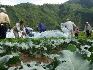 都留市での農業の様子